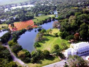 Patricia Van Dalen - Luminous Gardens